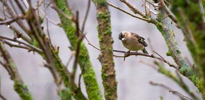 Vogel sitzt auf einem Zweig